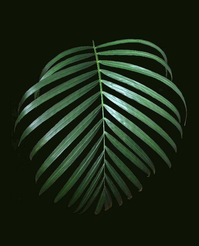 Simply Green dark