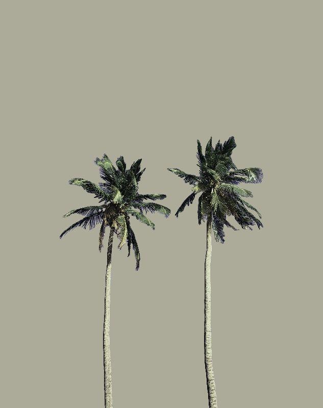 Twin Palms soft grey
