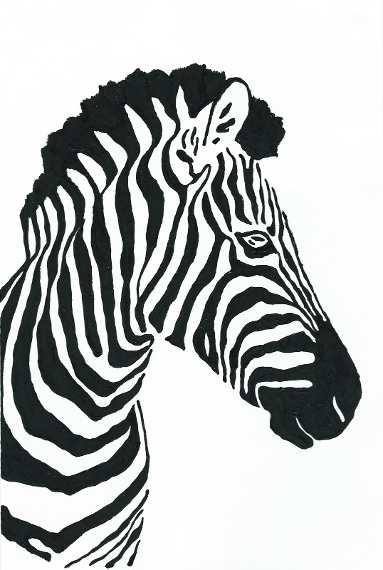 Black-and-White-Zebra