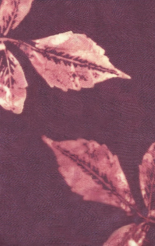 Faded-leaves-