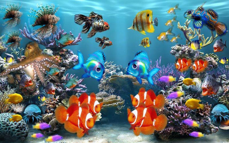 Aquarium Fish Style