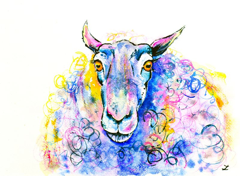 Colorful Sheep