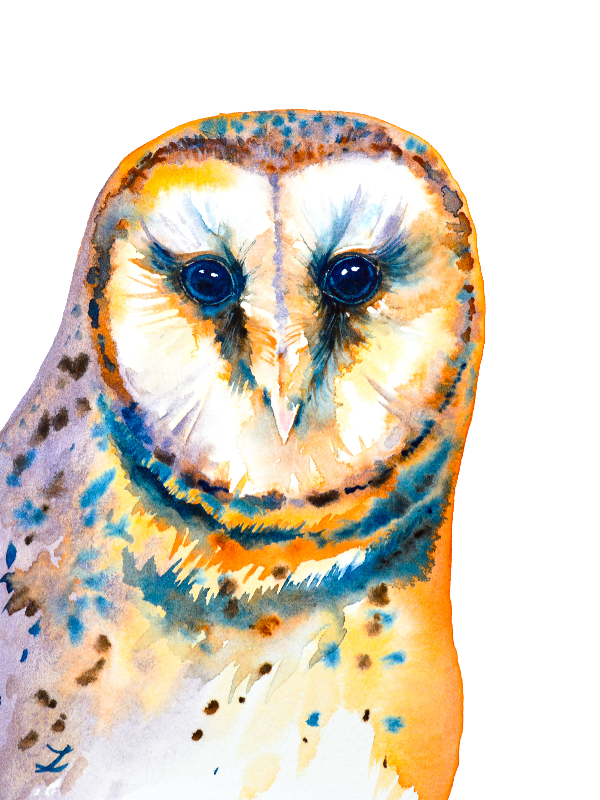 Gorgeous Barn Owl