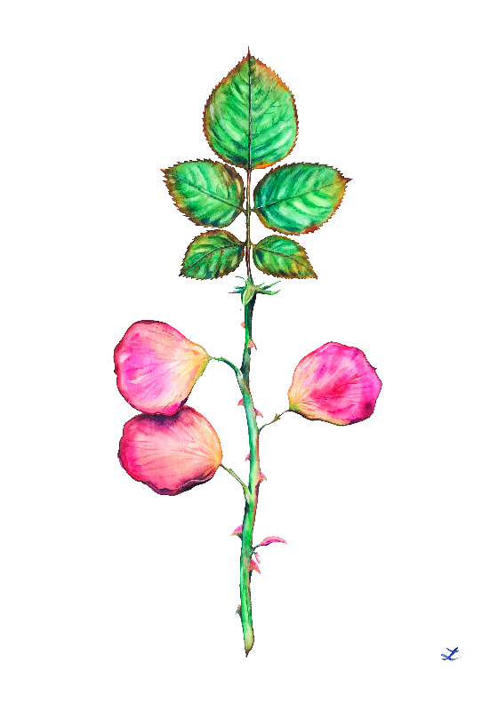 What if Roses