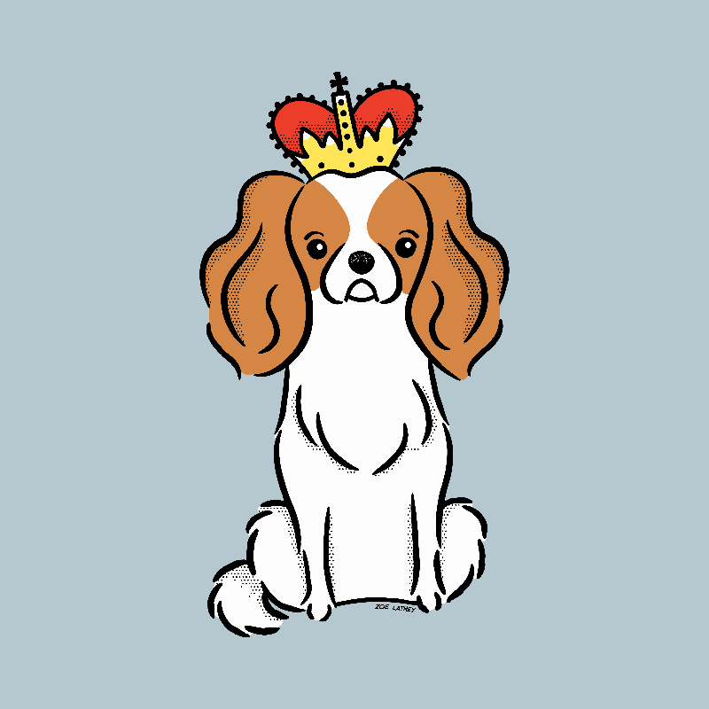 King Charles Spaniel Dog