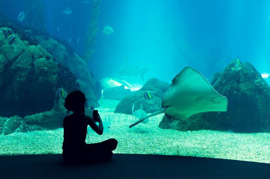 Aquarium Lissabon