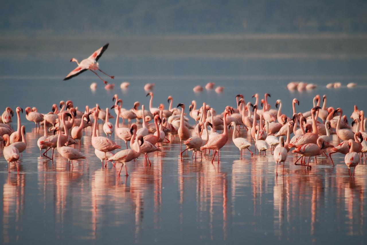Flamingo's Bonaire