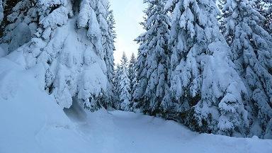 Hornerdorfer Duitsland bomen met sneeuw