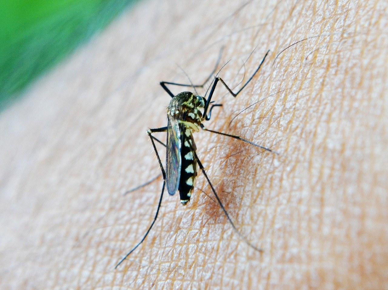 Malariamug prikt op de huid