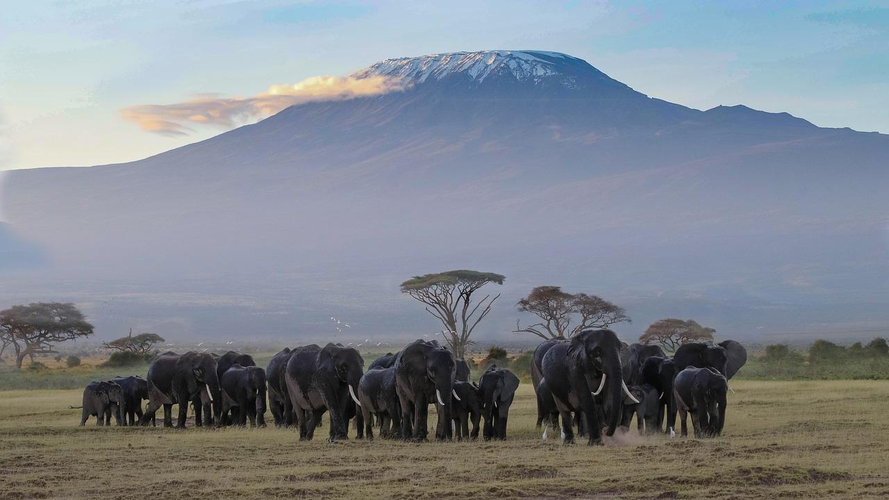 Tansanische Elefanten Kilamanjaro
