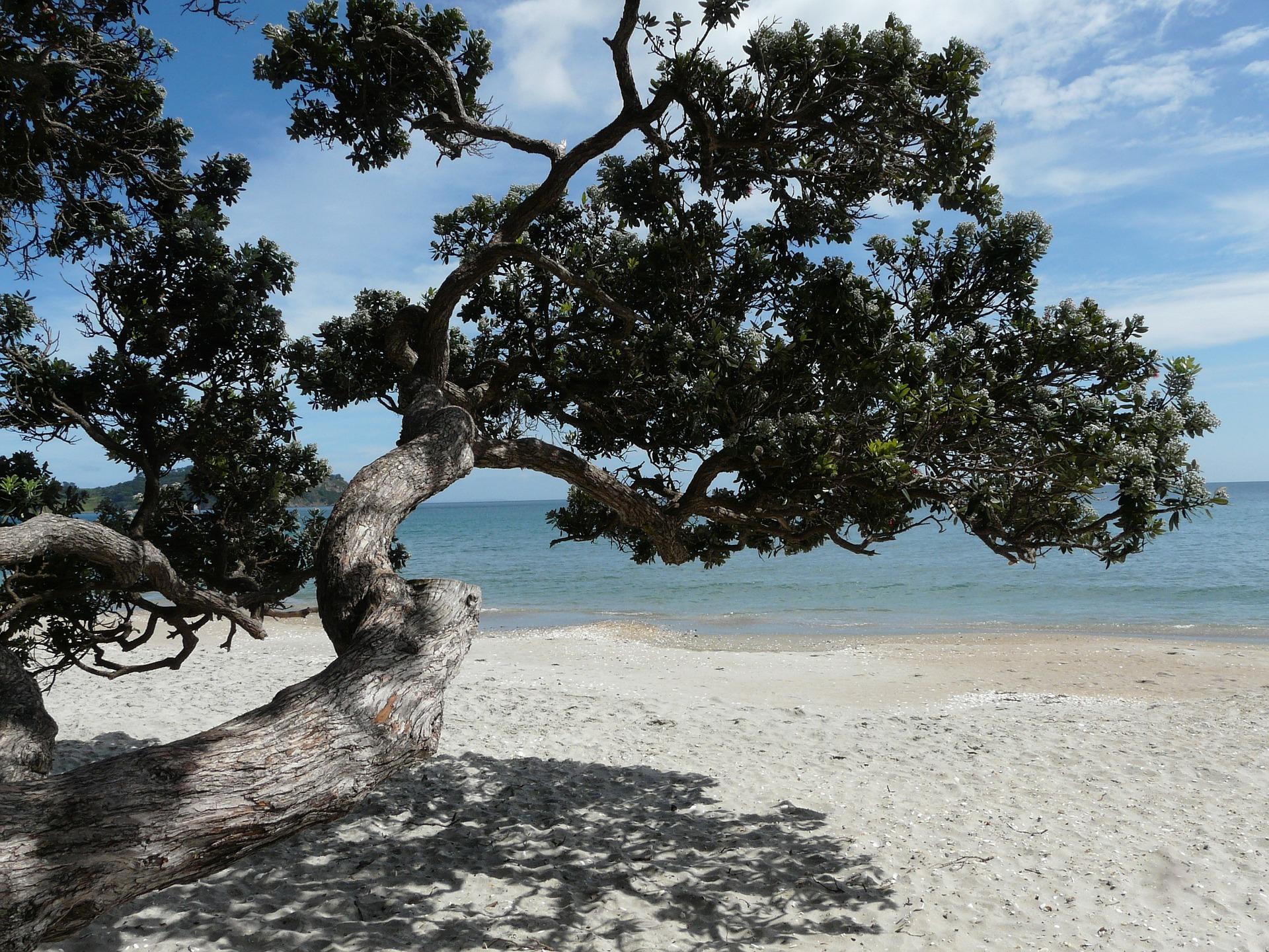 Waiheke Eiland Nieuw Zeeland