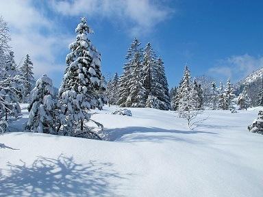 Allgau, Oberjoch Duitsland bomen met sneeuw