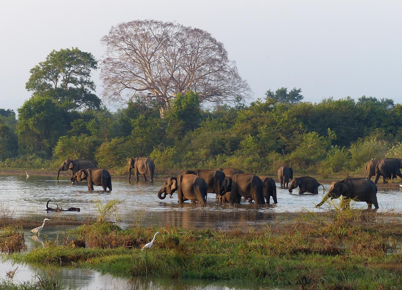 Sri Lanka, Dschungel und Elefanten ansehen