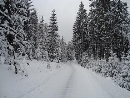 Bos in Winterberg Duitsland
