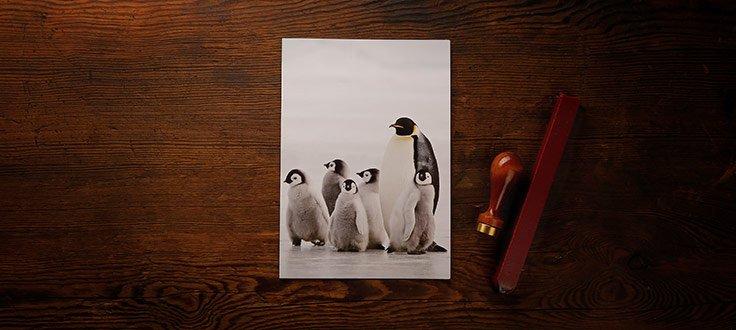 header_julgavokort_pingvin.jpg