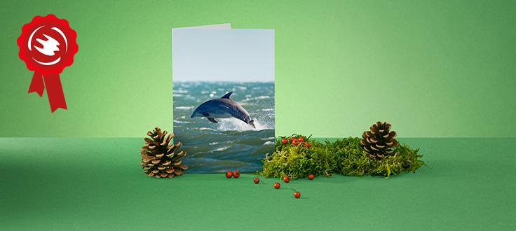 Promo julgåva hav