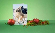Promo julgåva jordbruk