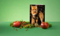 Promo julgåva skog