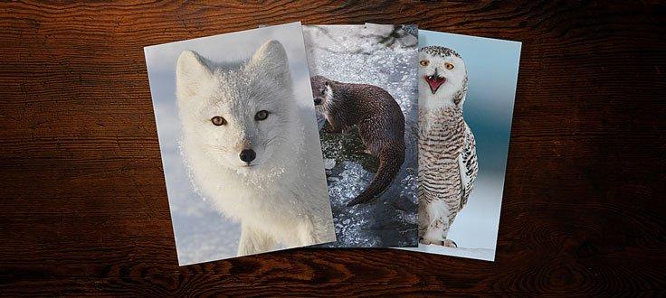 Julgåva 2020 med kort 3 djur motiv